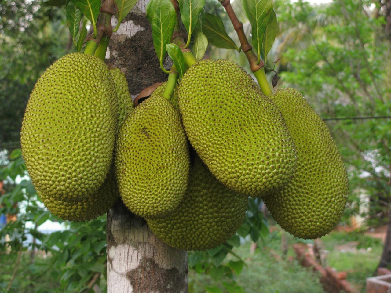 Jackfruit - 6 Nutrition & Diet Fads For 2018